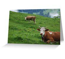 Swiss Cows Greeting Card