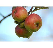 Apples Photographic Print