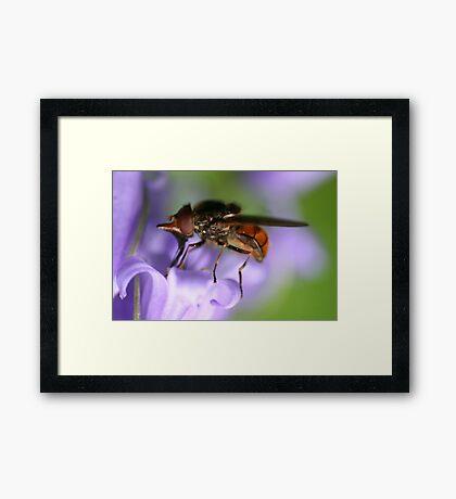 smalls beautiful Framed Print