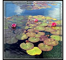 Pink Water Lilies at Sunset in a Mirrored Frame Photographic Print