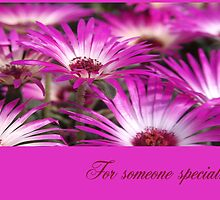 Livingstone Daisies Card - For Someone Special by Hazel Moore