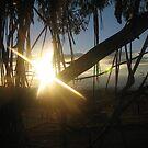 Sun through Leaves by Melissa Nash