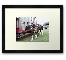 Shire Mare an Foal Framed Print