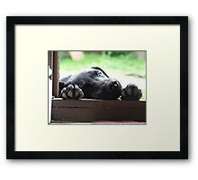 Puppy Paws Framed Print