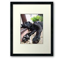 Big Paws Framed Print