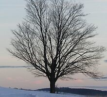 Winter's harsh loneliness by alamarmie
