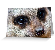 Have these eyes got it ? Greeting Card