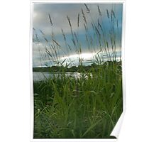 Through the Tall Grass Poster