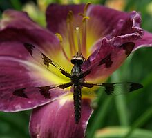 dragon fly by mckee81
