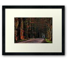 Last leaves in January morning light Framed Print