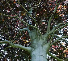 Auburn Branches by Sarah  Begley