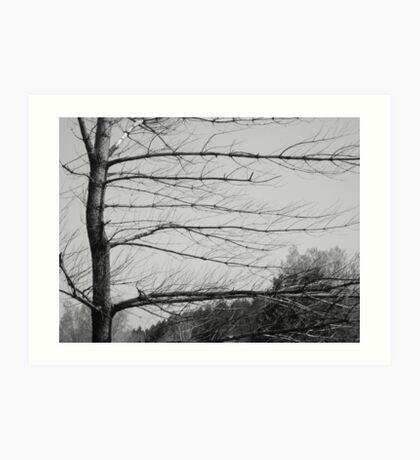 Bare Tree Art Print