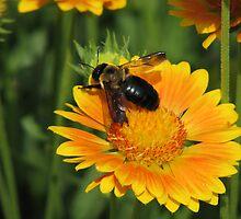 Bumble Bee by Sandra Torregrosa-Allen
