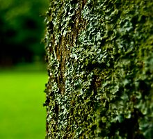 The Green Parasite by irishfirehound