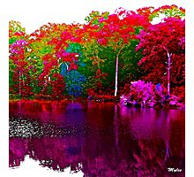 The Beautiful Trees By the Lake Photographic Print