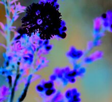 Australian wildflower - abstracted colours by Narelle Richardson