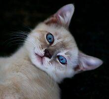 Blue Eyes by Lori Tingey