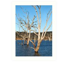 Lake Eildon Art Print
