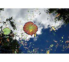 Serendipity Photographic Print