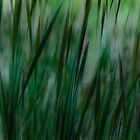 Mysterial Grasses by sundawg7