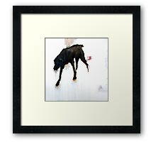 black dog Framed Print