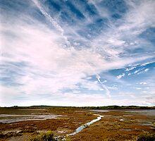 BOYNE ISLAND - Mud Flats by SHAZZ