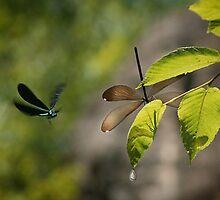 Dragonflies by Yuri Lev