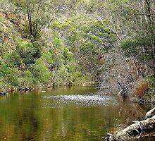 Lerderderg River - Bacchus Marsh, Victoria by EdsMum
