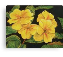 Primroses in the Dark  Canvas Print