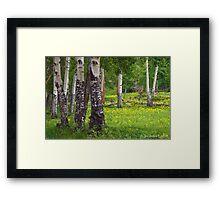 Aspen Wildflower Forests Framed Print