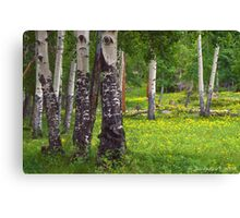 Aspen Wildflower Forests Canvas Print