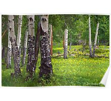Aspen Wildflower Forests Poster