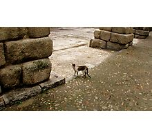 Gulliver-cat in the country of the giants Photographic Print