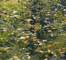 Leaves on the Water by Bette Devine