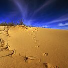 Fox tracks. by Steve Chapple