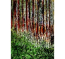 Rainforest - Collagraph/Relief Print Photographic Print