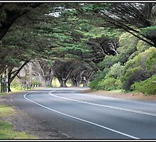 The Road to the Lighthouse by Roger Olasiman