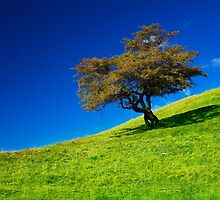 Single tree on a grassfield by naturalis