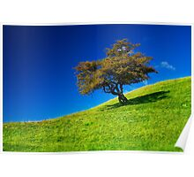 Single tree on a grassfield Poster
