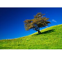 Single tree on a grassfield Photographic Print
