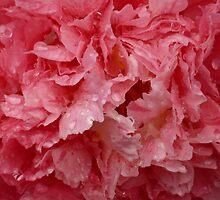 Camellia 2-1 by beeden