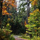 Šumava Forest 1 by Charles Kosina