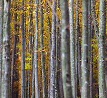 Colorful autumnal landscape by naturalis