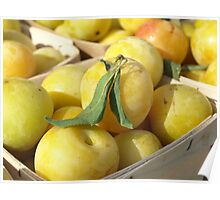 WHITE PLUMS Poster