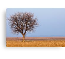 Single tree in plow land Canvas Print