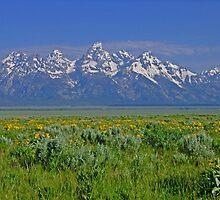 Grand Teton Range by Patricia Shriver