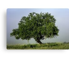 Lone tree in fog Canvas Print