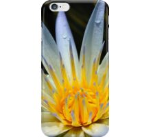 Water Lily flower, Adelaide Botanic Gardens SA iPhone Case/Skin