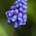Blue by Mirka Rueda Rodriguez
