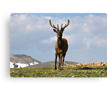 King of the Alpine Tundra Canvas Print